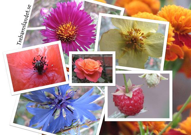 blommor_trebarnslandet